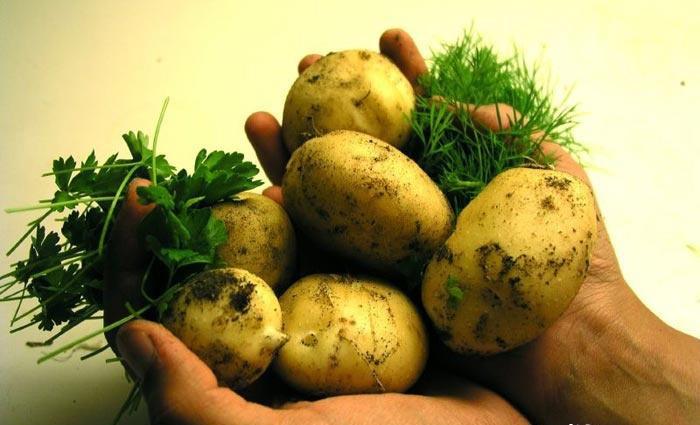 Самый калорийный овощ
